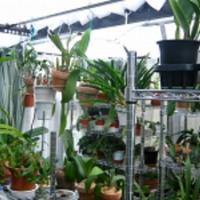 様々な植物がいっぱい